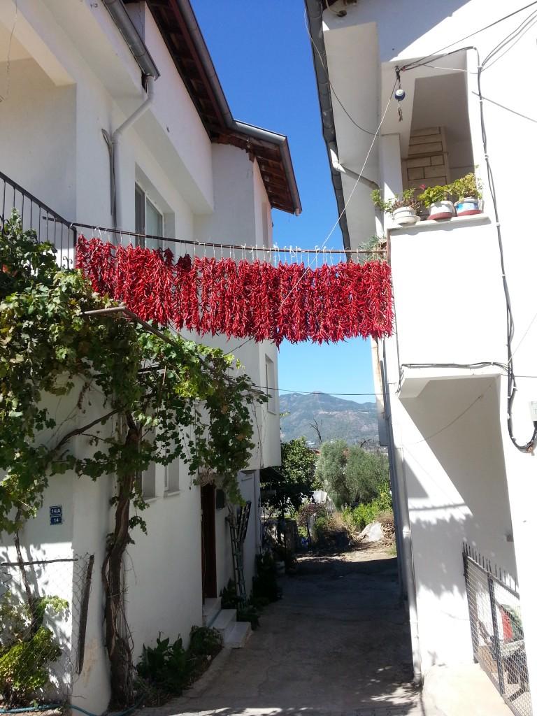 chilies drying in Üzümlü