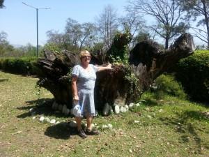 Some stump