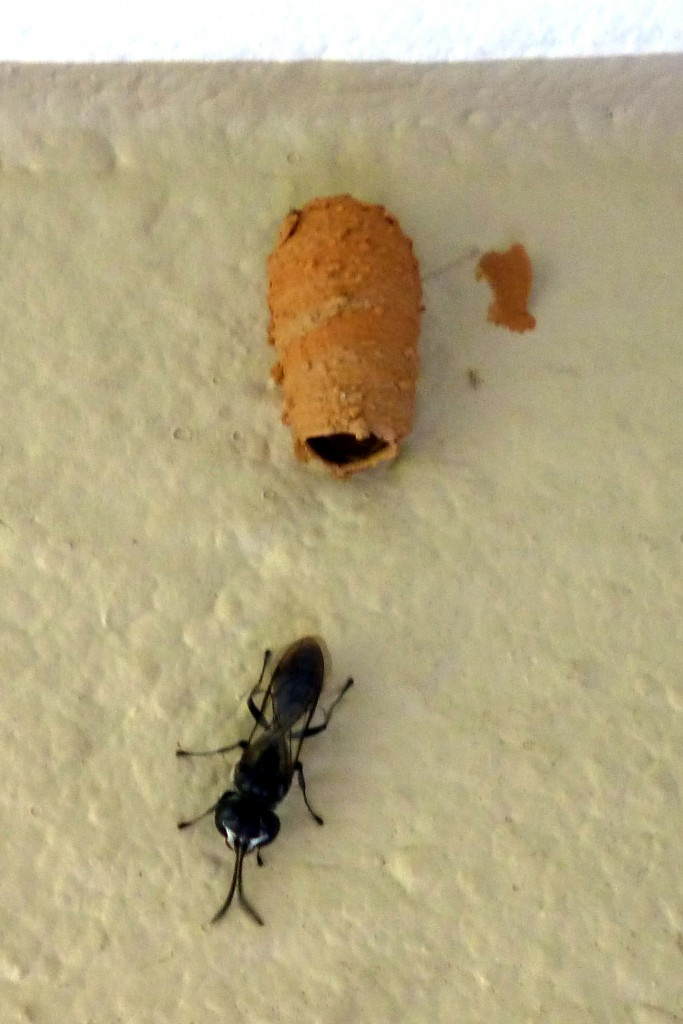 An ant and his house