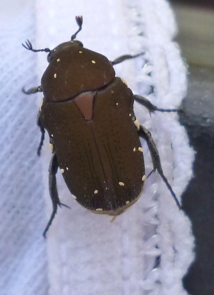 A friendly beetle